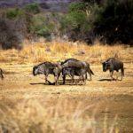 Katjapia Hunting