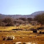 Katjapia_Namibia33
